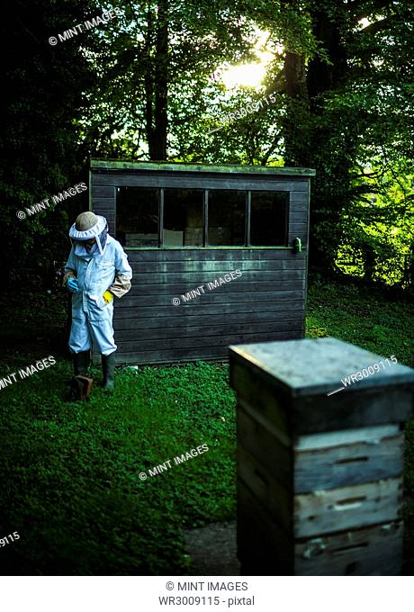 A beekeeper wearing protective clothing walking away from a shed towards a beehive