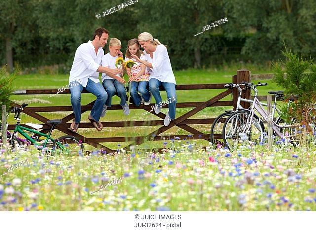 Family with bicycles sitting on fence and looking at sunflowers in wildflower field
