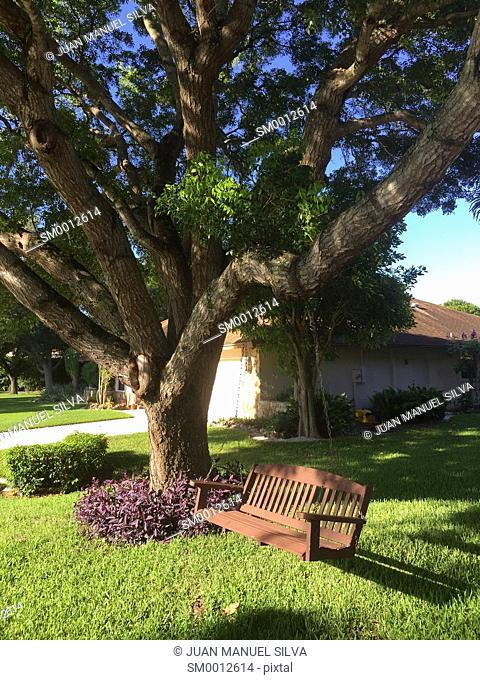 Swing chair hanging on a tree in front yard of house