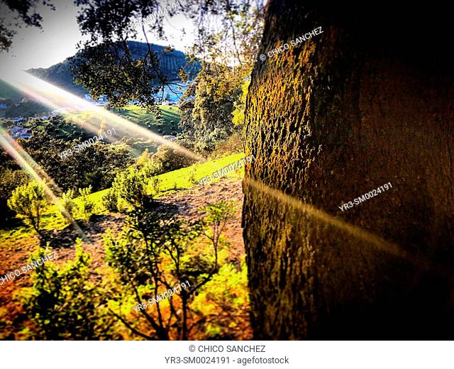 A ray of light shines in a forest in Prado del Rey, Sierra de Cadiz, Andalusia, Spain