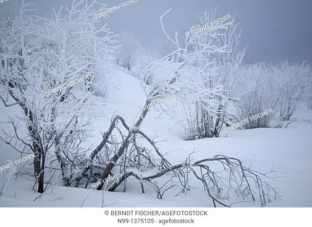 Snowy landscape in the Vosges, Hohneck, Alsace, France