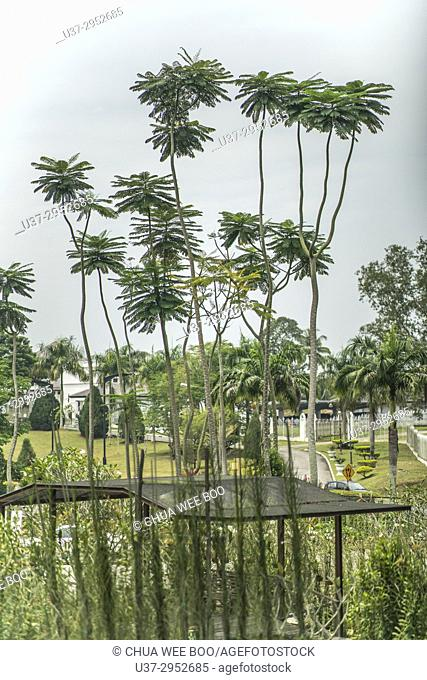 Kuching Orchid Garden, Sarawak, Malaysia