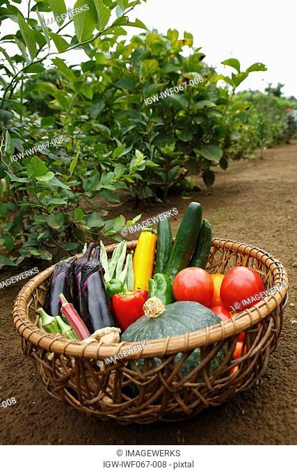 Fresh vegetables in basket, close-up