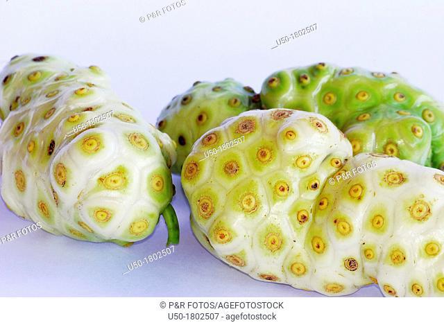 Fruits of noni, Morinda citrifolia, Rubiaceae  2012