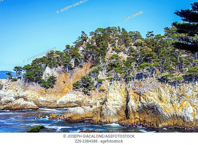 Pine trees and rocky coastline. Point Lobos State Reserve, California, United States