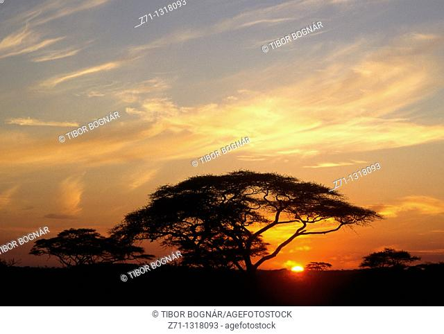 Tanzania, Serengeti National Park, sunrise at Seronera