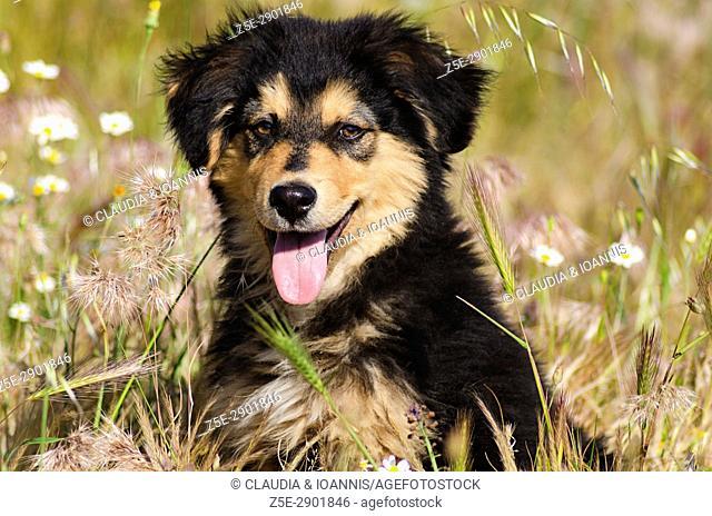 Portrait of a puppy sitting in a flower field