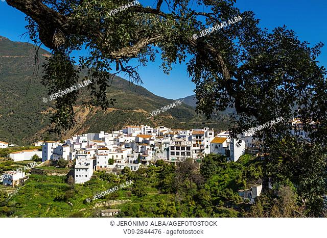 White village of Istan. Natural Park Sierra de las Nieves. Malaga province Costa del Sol. Andalusia Southern Spain, Europe