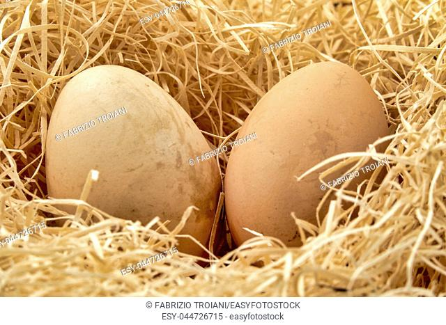 Close up shot of a couple of Eggs in a straw nest