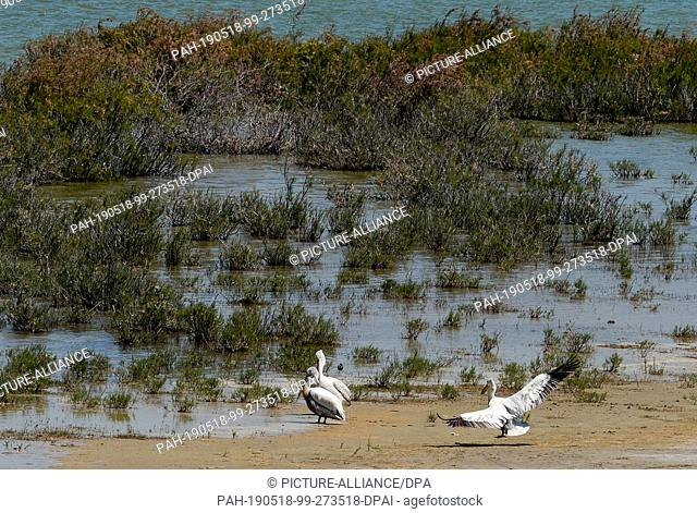 21 April 2019, Turkey, Didim: Pelicans at Lake Bafa. The water is an inland lake on the west coast of Turkey, formed from a former estuary