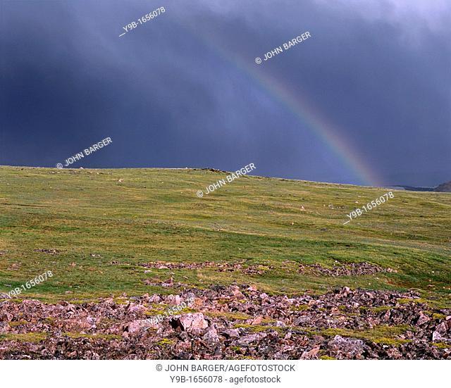 Rainbow and storm over alpine tundra, near Beartooth Pass, Beartooth Plateau, Shoshone National Forest, Wyoming, USA