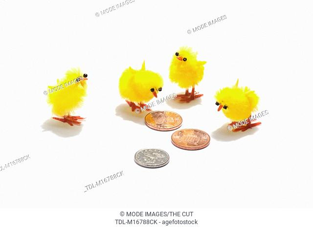 Four Easter chick decorations looking at sterling coins