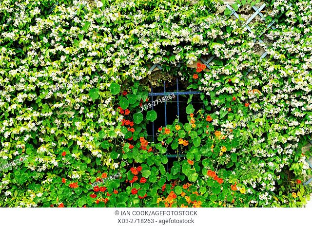 window with flowers, Saint-Emilion, Gironde Department, Aquitaine, France