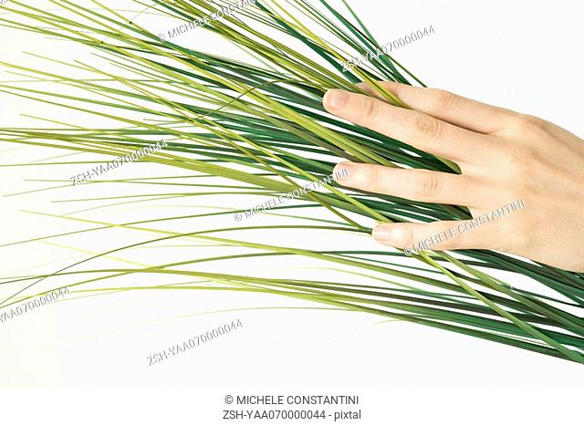 Hand touching palm frond