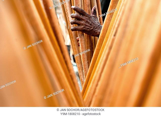 Wooden sticks drying in the sun at sawmill in Tumaco, Colombia, 17 June 2010  Tens of sawmills located on the banks of the Pacific jungle rivers generate almost...