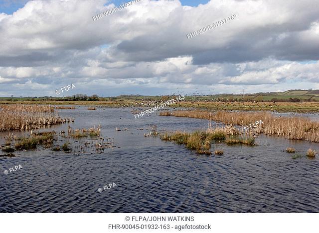 View of flooded floodplain grassland and wetland habitat, Greylake RSPB Reserve, Somerset Levels, Somerset, England, February