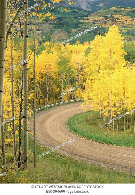 Dirt road through aspen grove. San Juan National Forest. Near Telluride. Colorado. USA