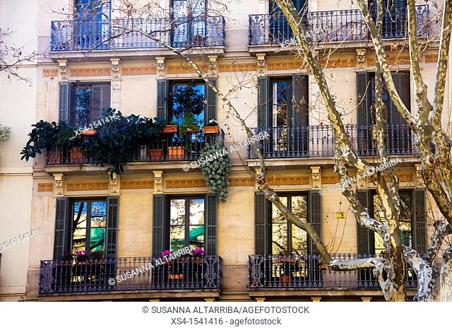 Balconies and windows with plants in Barcelona on Passeig San Joan, Barcelona, Spain, Europe