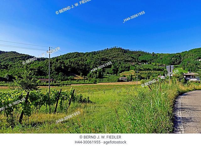 Europe, Italy, Veneto Veneto, Galzignano Terme, via Regazzoni Bassa, Eugenianische hill, vineyards, trees, mountains, scenery, fruit, panorama, plants