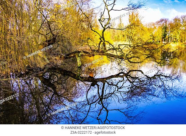 Reflection of trees in the water in Amsterdam North, The Netherlands, Europe