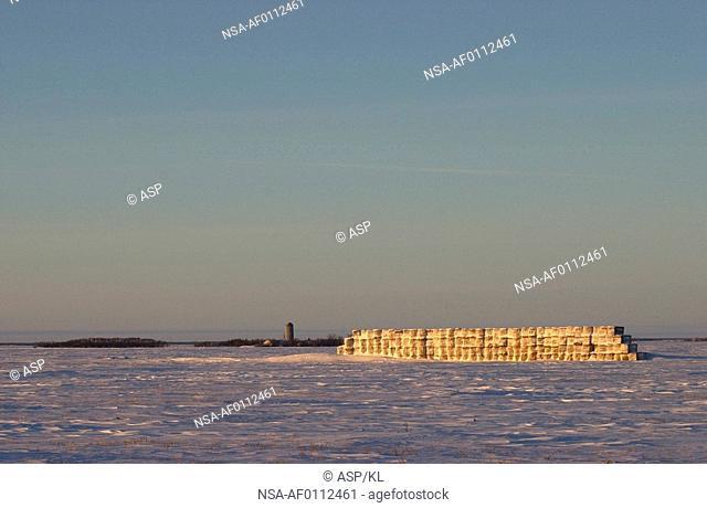 winter in Manitoba, prairie scene