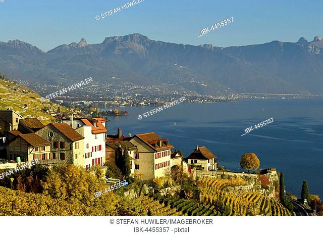 Vineyards in autumn, Lake Geneva and winegrowing village of Rivaz, Lavaux, Canton of Vaud, Switzerland