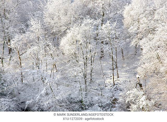 Winter Trees and Sunlight Knaresborough North Yorkshire England