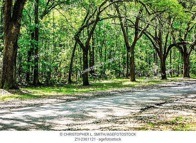 The Live Oak Avenue at Wormslow Plantation nr Savannah GA