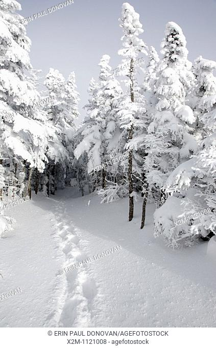 Mount Osceola Trail on the summit of Mount Osceola in the White Mountains, New Hampshire USA during the winter months