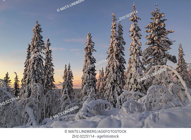 Winter landscape at sunset with nice color in the sky and snowy trees, Gällivare county, Swedish Lapland, Sweden