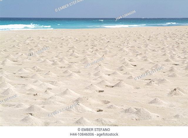 Yemen, Socotra island, Ras Irisseyl beach, Arabic, Arabian, Arab, travel, UNESCO, world natural heritage site, Landsca