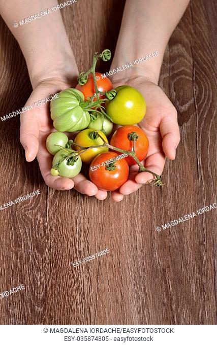 Fresh tomatoes in hands on wooden table