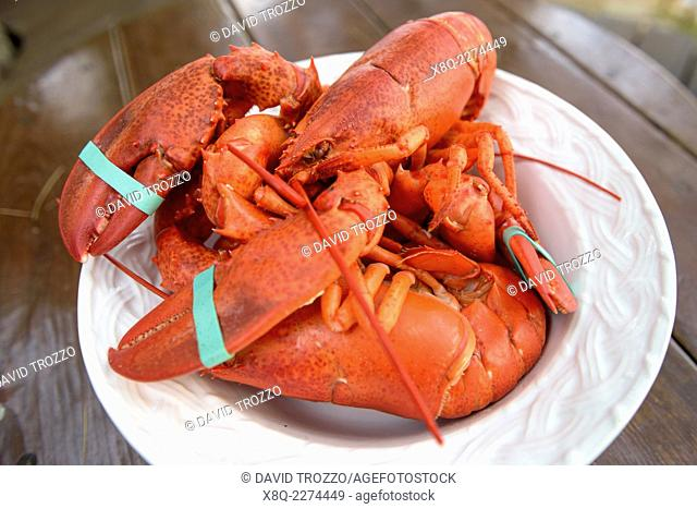 Fresh steamed Maine lobster ready to crack open and eat, Bar Harbor, Maine, USA