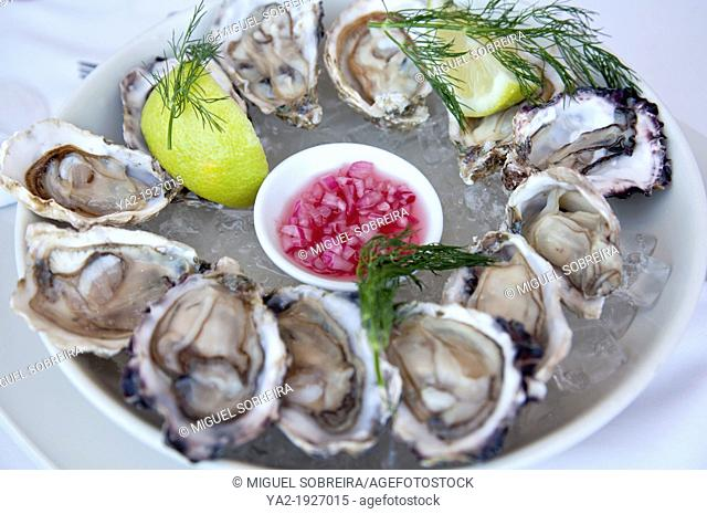 Cape Cuisine of a Dozen Oysters - South Africa