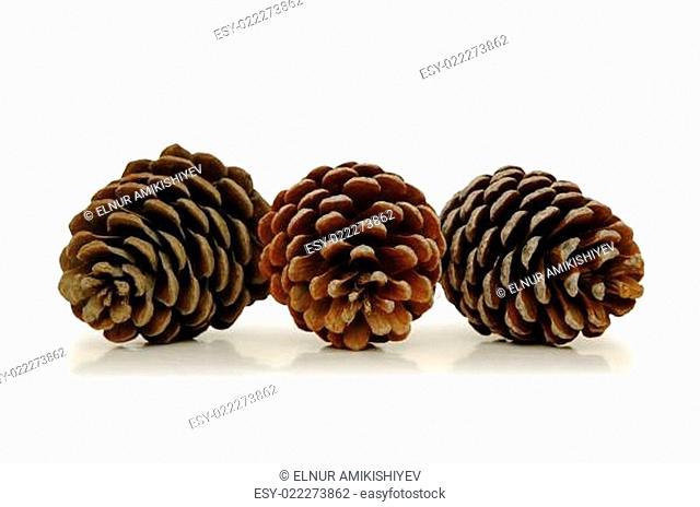 Three pine cones isolated on white
