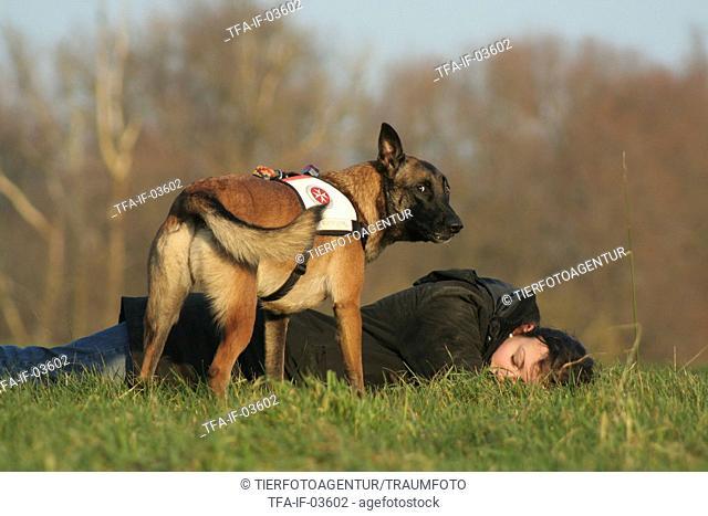 rescue dog training
