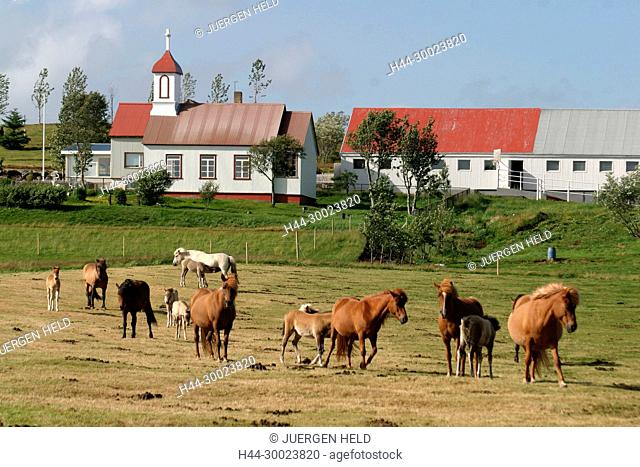 Iceland, little village with Iceland ponies in front in south west iceland