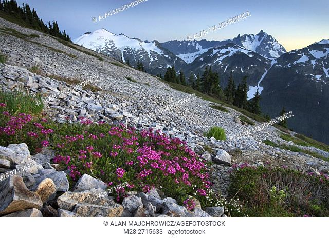 Ruth Mountain and Mount Shuksan viewed from wildflower meadows of Hennegan Peak, Mount Baker Wilderness North Cascades Washington
