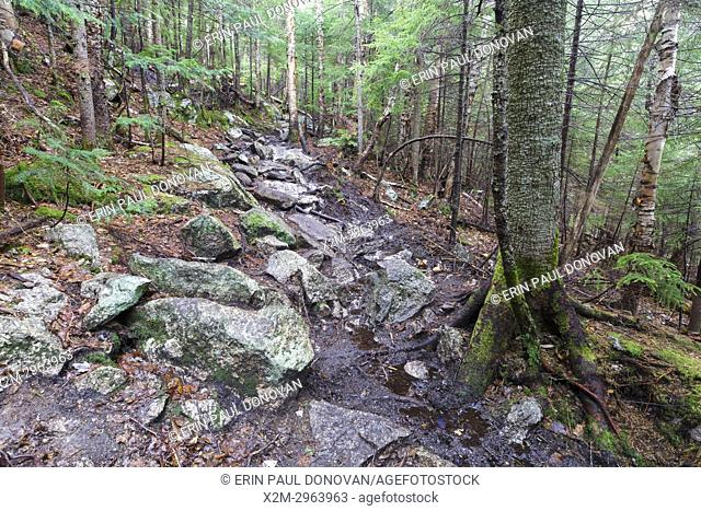 An area along the Mt. Tecumseh Trail in Waterville Valley, New Hampshire during the spring of 2017 that is in desperate need of drainage work