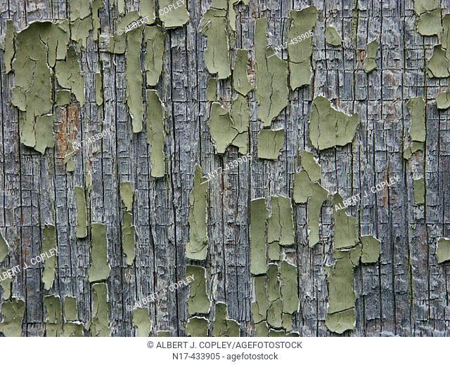 Peeling paint and wood grain close up