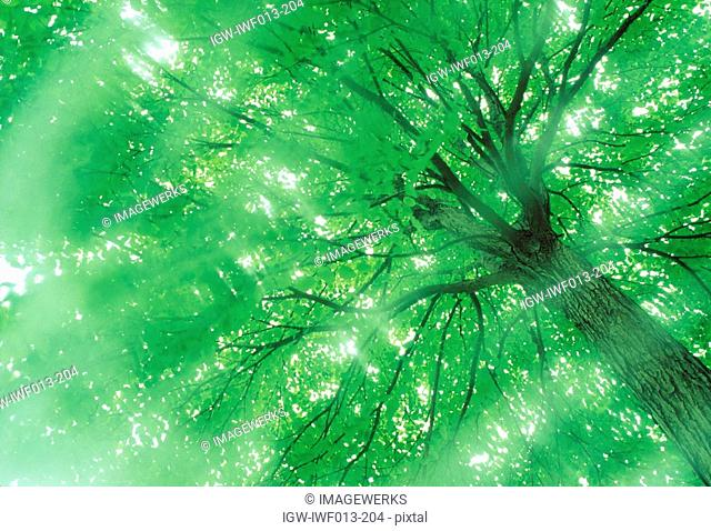 Low angle view of a huge tree with branches