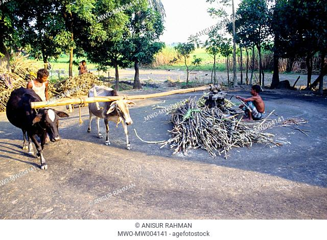 Processing juice from sugarcane