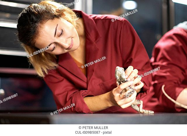 Female college students handling frill-necked lizard in lab