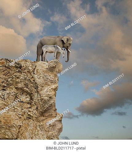 Elephant and donkey looking over edge of cliff