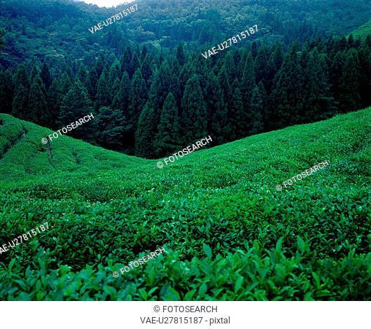 scenery, plant, tree, mountain, film