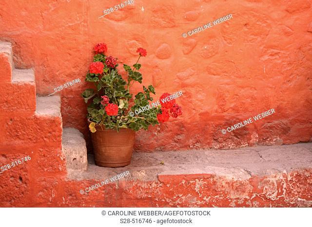 Flowers in Santa Catalina Monastery