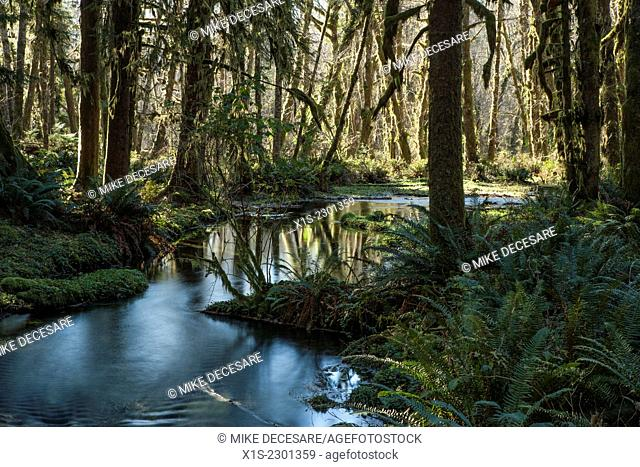 A stream flows in and out of sunlight as it flows through a dense forest in the Pacific Northwest