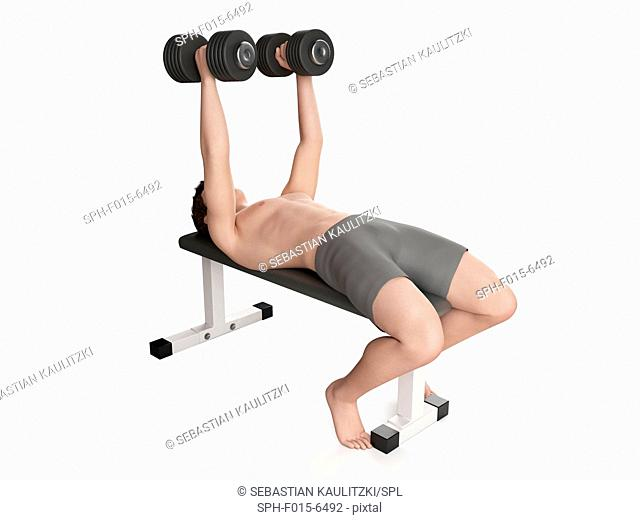 Man doing dumbbell fly with hand weights, illustration