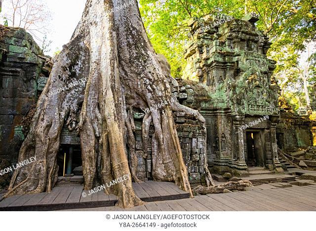 Ta Prohm temple (Rajavihara), Angkor, UNESCO World Heritage Site, Siem Reap Province, Cambodia