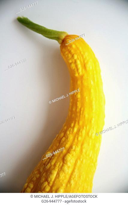 Yellow crookneck squash